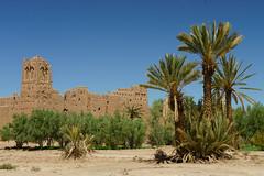 RU_201904_Maroc_157_x (boleroplus) Tags: horizontal palmeraiedeskoura palmier paysage skoura maroc
