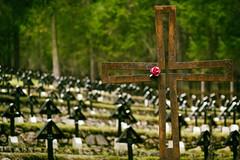 A Res Rose for Jesus (Salmoopen) Tags: dolomite italy misurina braies garda alpedisiusi ranui valdifunes