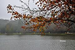 Lago São Bernardo, São Francisco de Paula RS - Brasil (jvaladaofilho) Tags: nikon nikond5300 valadaoj brasil rs saofranciscodepaula outono cenasurbanas natureza nature