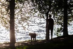 walking a dog in the evening (VisitLakeland) Tags: finland kuopio kuopiotahko lakeland backlight city evening ilta kävelijä kävellä lake maisema vastavalo walk