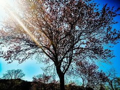 Fate come l'albero, che cambia le foglie e conserva le radici. Cambiate le vostre idee e conservate i princìpi. (Nabel Grant) Tags: nature naturephotography beauty treelife red sky canonphotography