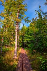 Superior Hiking Trail Boardwalk at George Crosby Manitou State Park, Minnesota (Tony Webster) Tags: crosbymanitoustatepark georgecrosbymanitoustatepark georgehcrosbymanitoustatepark minnesota northshore sht superiorhikingtrail autumn boardwalk fall forest hike hiking hikingtrail statepark trail trees eastlake unitedstatesofamerica
