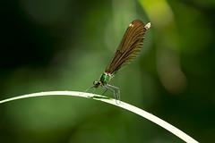 (Jérôme_M) Tags: nature canon eos bokeh insecte libellule faune natgeo landes aquitaine 600d seignanx lemondedelaphoto natimages
