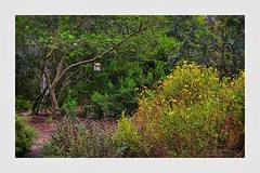 Privileged Space (Christina's World!) Tags: 5942 landscape leaves birdhouse flowers daisies trees woods green nature painterly textures brightcolors border botanicgarden california sandiego botany creative colorful colors dramatic serene impressionism impressionistic kurtpeiser light morninglight neighborhood outdoors plants scenic tree unitedstates usa vegetation vividcolors exotic yellowflowers eoft sdbg