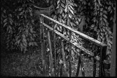 cast iron gate, rusted, front yard, neighborhood, Asheville, NC, Bencini 24S, Bergger Pancro 400, HC-110 developer, 5.28.19 (steve aimone) Tags: gate castiron rust rusted hangingbranches frontyard neighborhood asheville northcarolina bencini bencinikoroll24s berggerpancro400 hc110developer 120 120film film halfframe mediumformat monochrome monochromatic blackandwhite