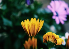 My mind won't forget.. (erlingraahede) Tags: flowers colors bokeh denmark spring colorful canon vsco