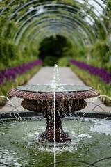 Fountain and alliums (tonybill) Tags: flowers gardens may miscellaneous rhs rhswisley sonya7riii sonyfe85mmf14gm surrey wisley bokeh