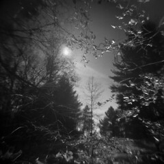 Mirror of Spring (LowerDarnley) Tags: holga reflection vernalpool spring woods trees whiphill morningwalk localwoods sun branches leaves