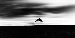 Traces of Time (One_Penny) Tags: sky black tree nature field grass composition landscape photography spain alone bend time branches minimal trunk lonely lonelytree canon6d longexposure light blackandwhite bw white blur silhouette clouds contrast mood horizon fineart motionblur atmospheric tracesoftime