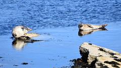 North Ronaldsay (James.Stringer) Tags: scotland orkney northronaldsay