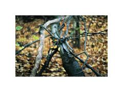 (kotmariusz) Tags: nature 35mm woods orest poland analog leafs exa1b fujicolor c200 helios