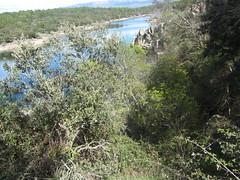 The  River Lozoya  through the trees,  river walk (d.kevan) Tags: views trees plants undergrowth rivers hills riverlozoya riverwalk madrid riverbanks rocks buitragodelozoya