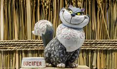 Lucifer (kla4067) Tags: cat lucifer