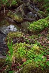Emeralds (thriddle) Tags: woodland xtransformer yorkshire