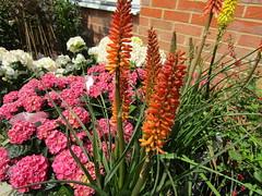 IMG_0068 (belight7) Tags: garden centre shop nature uk berkshire england