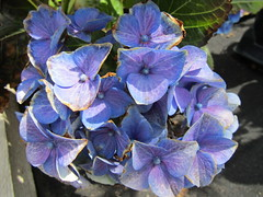 IMG_0081 (belight7) Tags: garden centre shop nature uk berkshire england