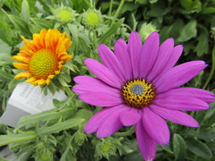 IMG_0087 (belight7) Tags: garden centre shop nature uk berkshire england