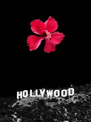 Hollywood (Taymaz Valley) Tags: hollywood hollywoodsign california losangeles orangecounty usa movies cinema losangeleslife love nyc chicago detroit washingtonstate seattle vancouver ottawa montreal japan tokyo