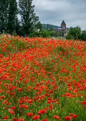 Poppies (Donard850) Tags: poppies field france church trees dordogne fujixt20