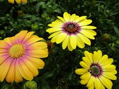 IMG_0103 (belight7) Tags: bees flowers garden centre uk england berkshire
