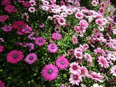 IMG_0104 (belight7) Tags: bees flowers garden centre uk england berkshire
