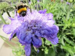IMG_0066 (belight7) Tags: bees flowers garden centre uk england berkshire