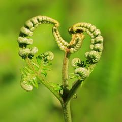 Lovely Greens (Mark Wasteney) Tags: gorgeousgreenthursday hggt greens bracken heart squareformat