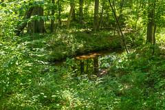 19-2123 (George Hamlin) Tags: virginia chantilly stream creek flatlick run water forest trees plants green reflection colorful nature vibrant leaves photodecor george hamlin photography