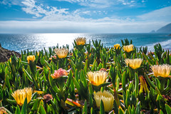 Malibu Beach Sycamore Beach State Park God Spilled a Bucket of Paint! Sony A7R III & Carl Zeiss 16-35mm F4.0 Spring Wild Flower Super Bloom Elliot McGucken Fine Art Landscape & Nature Photography! Springtime Flowers Blooming! (45SURF Hero's Odyssey Mythology Landscapes & Godde) Tags: malibu california wildflowers superbloom creek state park god spilled bucket paint sony a7r iii carl zeiss 1635mm f40 spring wild flower super bloom elliot mcgucken fine art landscape nature photography springtime flowers beach sycamore blooming