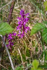 Rathlin Flora (apcmitch) Tags: flowers islands sealmorning rathlin sonya7