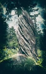 Anglų lietuvių žodynas. Žodis timber reiškia 1. n 1) statybinė miško medžiaga; 2) rąstas; sija;2. v 1) ręsti iš medžių; 2) dirbti dailidės darbą lietuviškai.