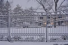 Happy Fence Friday (stevelamb007) Tags: snow illinois nikon bannockburn stevelamb fencefriday d7200 fancyironfence fence springsnowstorm