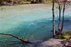 Green River (tez-guitar) Tags: river water green highland nagano shinshu leica leicacl varioelmar1856 tree wood