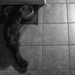 The Terror that Cats in the Night (148/365) (lacygentlywaftingcurtains) Tags: 365 cat lucy lulu dark shadows black lowkey blackandwhite monochrome eating fooddishes bowl catfood fromabove