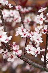 Fleurs 30 Mai-1 (Erik Bay) Tags: fleurs printemps2019