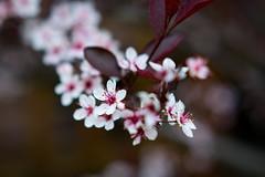 Fleurs 30 Mai-2 (Erik Bay) Tags: fleurs printemps2019