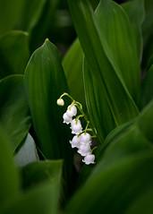 Fleurs 30 Mai-5 (Erik Bay) Tags: fleurs printemps2019