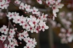 Fleurs 30 Mai-6 (Erik Bay) Tags: fleurs printemps2019