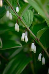 Fleurs 30 Mai-7 (Erik Bay) Tags: fleurs printemps2019