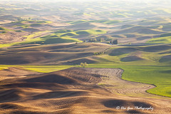 The Palouse Waves (PhotoDG) Tags: hill wave palouse landscape telephoto field farm framing wheat pattern color washington statepark steptoebutte steptoe texture ef70200mmf4lisusm whitmancounty