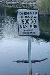 Just a Nibble, Please? (wales23us) Tags: alligator sanibelisland florida