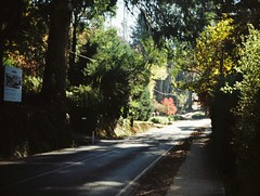Yet again, for the 9001st time, it's Mount Dandenong Tourist Road (Matthew Paul Argall) Tags: jcpenneyelectronicstrobepocketcamera fixedfocus 110 110film subminiaturefilm lomographyfilm 200isofilm road street mountdandenongtouristroad