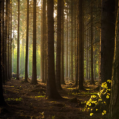 Feeling of the void (Petr Sýkora) Tags: les nature forest trees morning thought sunrise czech
