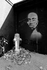 Super Angulon 21mm f3.4 (DUNAVERDE REPORTAGES) Tags: superangulon colors black murales blackwhite vintagelens vintage lens 21mm leicam9