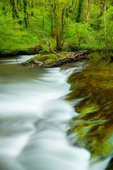 Dovedale Greens (Julian Barker) Tags: river dove dovedale white peak derbyshire flow flowing water scar waterfall fall green greens bank riverside east midlands england great britain uk europ canon dslr 5d mkii julian barker