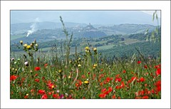 In mezzo ai papaveri (11) (Jambo Jambo) Tags: castiglionedorcia papaveri poppies panorama landscape campagna countryside valdorcia siena toscana tuscany italia italy sonydscrx10m4 jambojambo