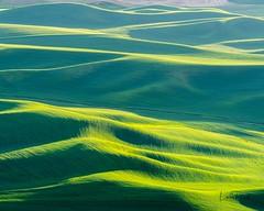 The Palouse, the 'Tuscany of America'. (Linda JP) Tags: crops fields steptoebutte steptoe washington rollinghills tuscanyofamerica thepalouse palouse