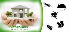 pest control Vancouver (vancouverpestcontrolltd) Tags: pest pestcontrol pests vancouver rodent cockroach fly