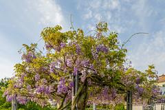 Magnifique printemps (Micaël Chevalley (Atelier Digital)) Tags: couleursphotographie micaëlchevalley fujifilmgfx50r fujifilmgf3234 couleursphotographiech