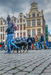 What's up? (stevefge (away)) Tags: belgium brussel brussels bruxelles grandplace people candid men dogs cobbles cobblestones architecture hats crowds goldenage gables gevels historic street nikon perspective reflectyourworld unsuspectingprotagonists unsuspecting